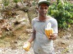 Restoration Farm Village Portland Jamaica